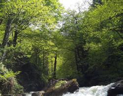 orman_havası