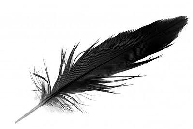 plume-noire-fond-blanc_32525-86.jpg