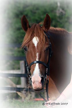 Macaroni Pony