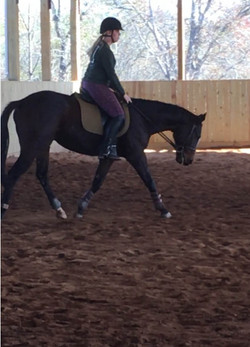 pauly 15.2 hh 5 year old TB gelding
