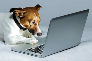 cute dog operating an apple mac laptop