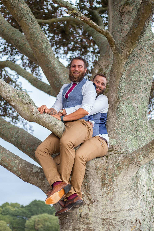 Groom in a tree