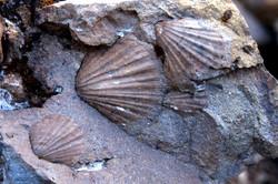 trekking a los fósiles