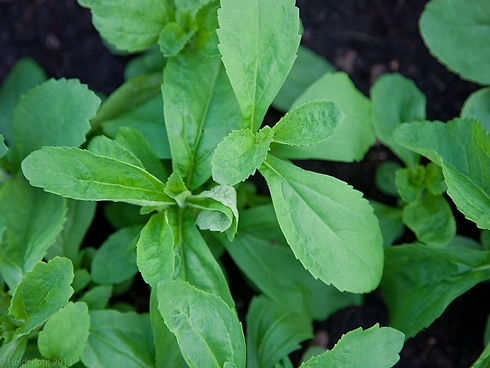 Stevia%20is%20a%20natural%20sweetener%20