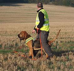 Houndseeker Bloodhounds Porter