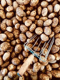 Potatis från Höglunda Gård