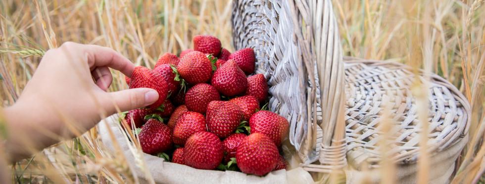 Som jordgubbar smakade förr
