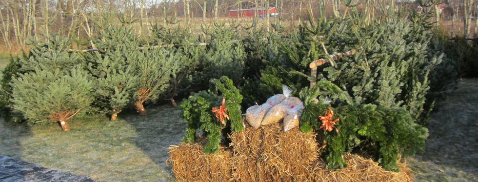 Julgransförsäljning på gården Vareborg
