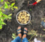 Bärhandel Odlare Jordgubbsodling  Självplockning  Vinbär Gårdscafe Grönsaker Potatis Gårdscafé Grönsaksförsäljning Jordgubbsförsäljning Nypotatis Bärodlare Bärplockning Bär Gårdsbutik Cafe Julgransförsäljning Jordgubbar Färskpotatis Julgranar Självplock Bärförsäljning Jordgubbskafé Vareborg
