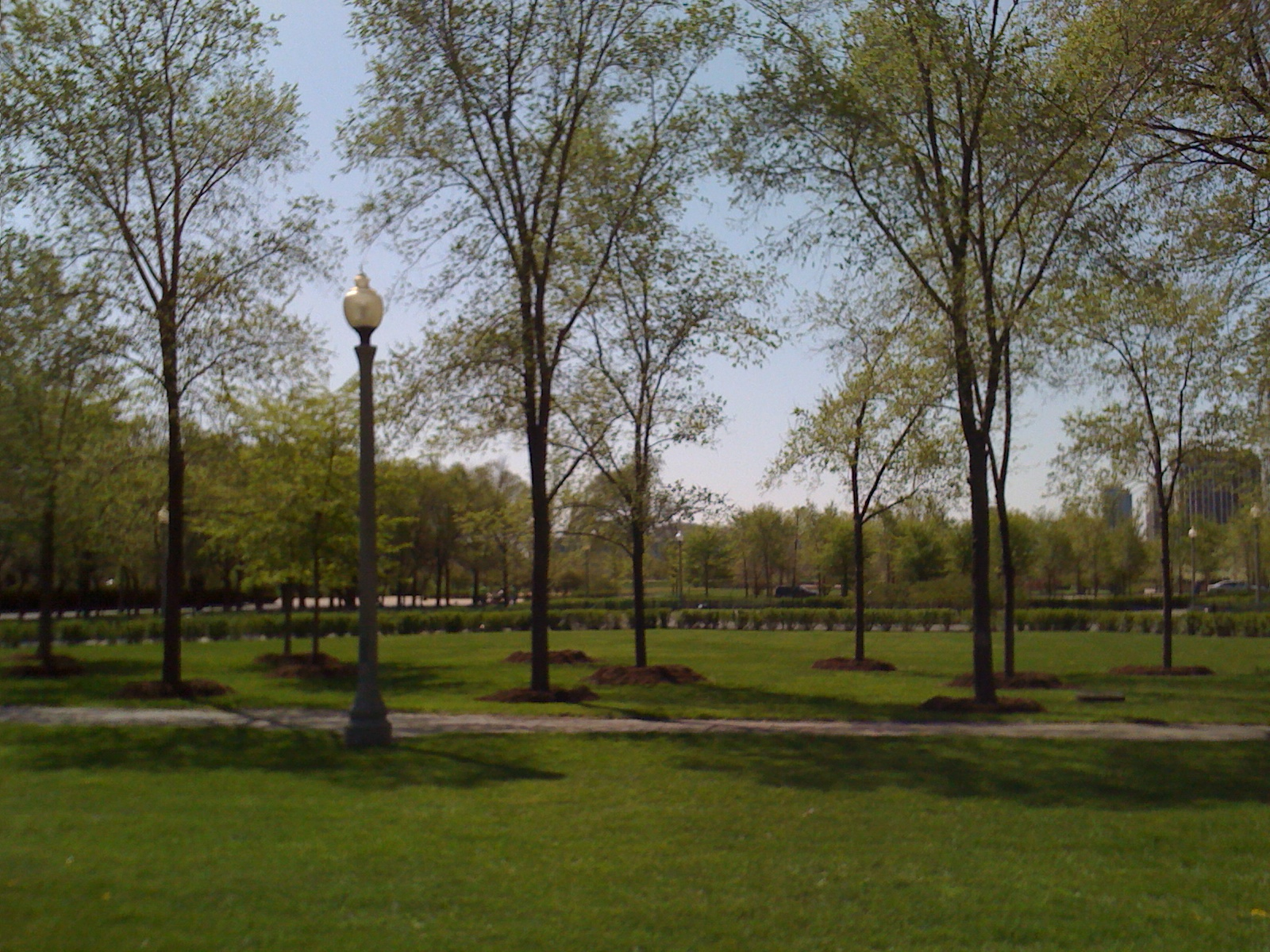Grant Park Trees Reforestation 5