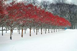 Grant Park Trees Reforestation 13