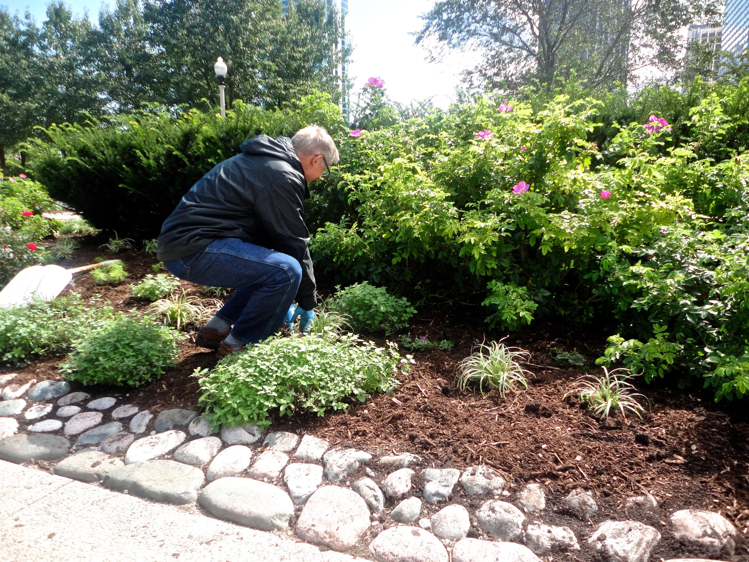 Flower Planting at Chopin Garden