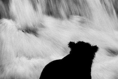 Brooks River Bear Silhouette