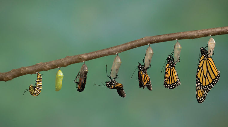 transformation_talent_presans.jpg