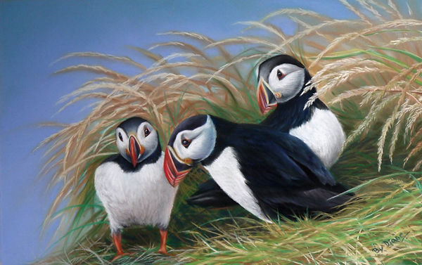 DArtEx_S-Can-I-Join-your-Puffin-Circus--
