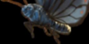 absolem mariposa.png