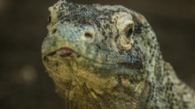 Exorcising Your Lizard Brain