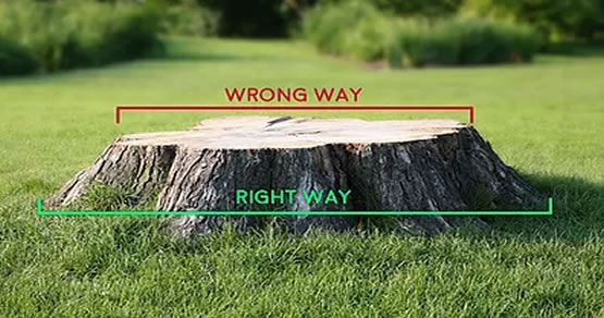 Receiving a stump removal quote today is easy! All you need is a tape measure or a ruler! Just measure the stump's radius (its width, from the two furthest edges) and you're all set!