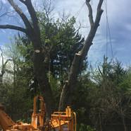 Tree removal - rigging