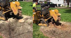 Stump Grinding, Stump Removal