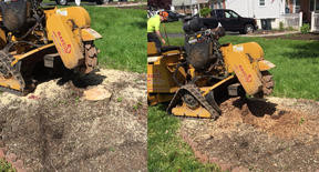 Stump Removal Before After.jpg