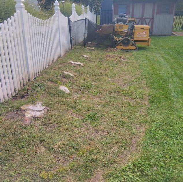Multiple Stump Removals