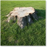 Stumps are an eyesore on any property, commercial or otherwise. Furthermore, they can become a tripping hazard, or a home to dangerous pests, such as termites, wasps, rodents, and more! Call or email Miles Stump Removal for a stump removal quote today!