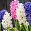 Thumbnail: (D-J) Magiske urter, blomster, nødder og frø - økologisk og håndplukket