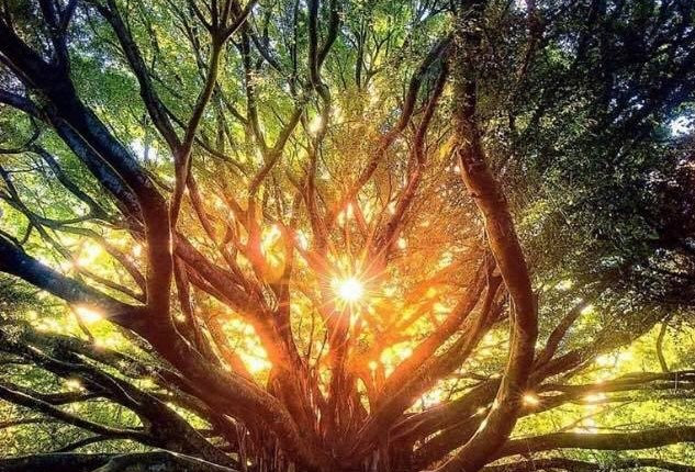 Remote Shamanic journeying for healing, guidance and personal empowerement