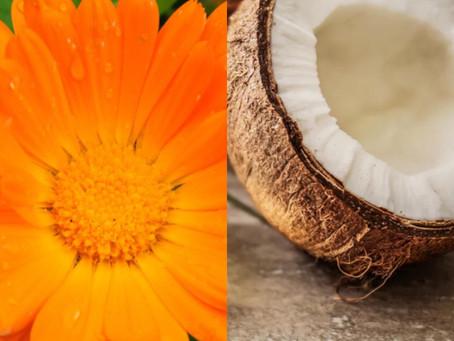 Calendula Marigold healing ointment