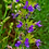 Thumbnail: (D-J) Magical herbs, flowers, nuts and seeds - organic, handpicked