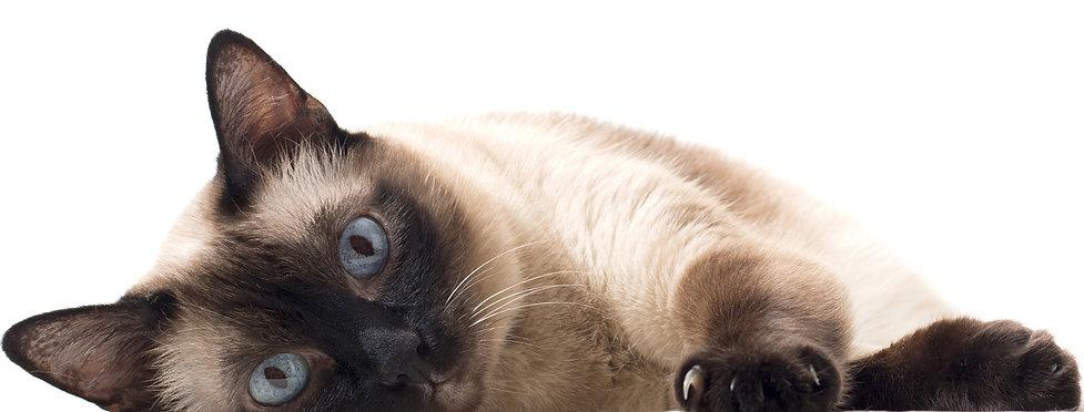 Cat Landing Page 3 (2).jpg