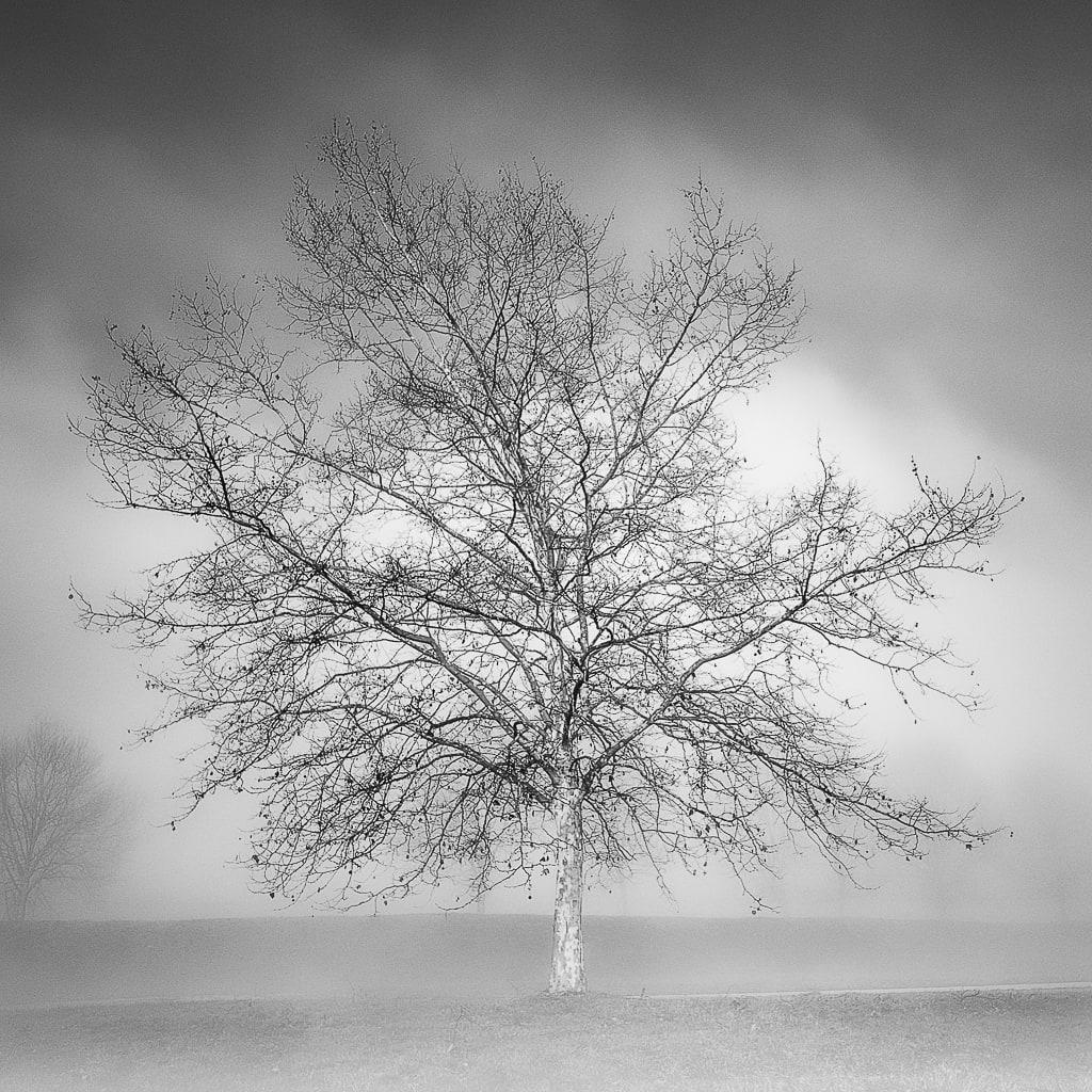 arbre_noir-et-blanc