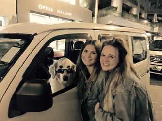 Saturday 23rd January 2016 - Disco Dog