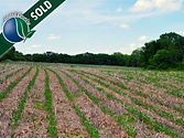 40 acres gentry sold.png