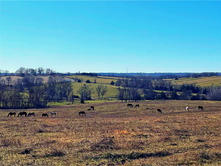 SOLD  110+/- Acre Hard to Find Southern Buchanan County Farm