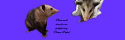 possum 7