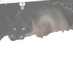 stray cat 5