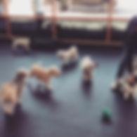 Dog Daycae