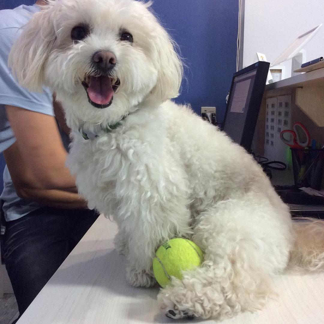 Small Dog (20 lb.)Bath & Brush
