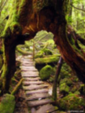 tree tunel.jpg
