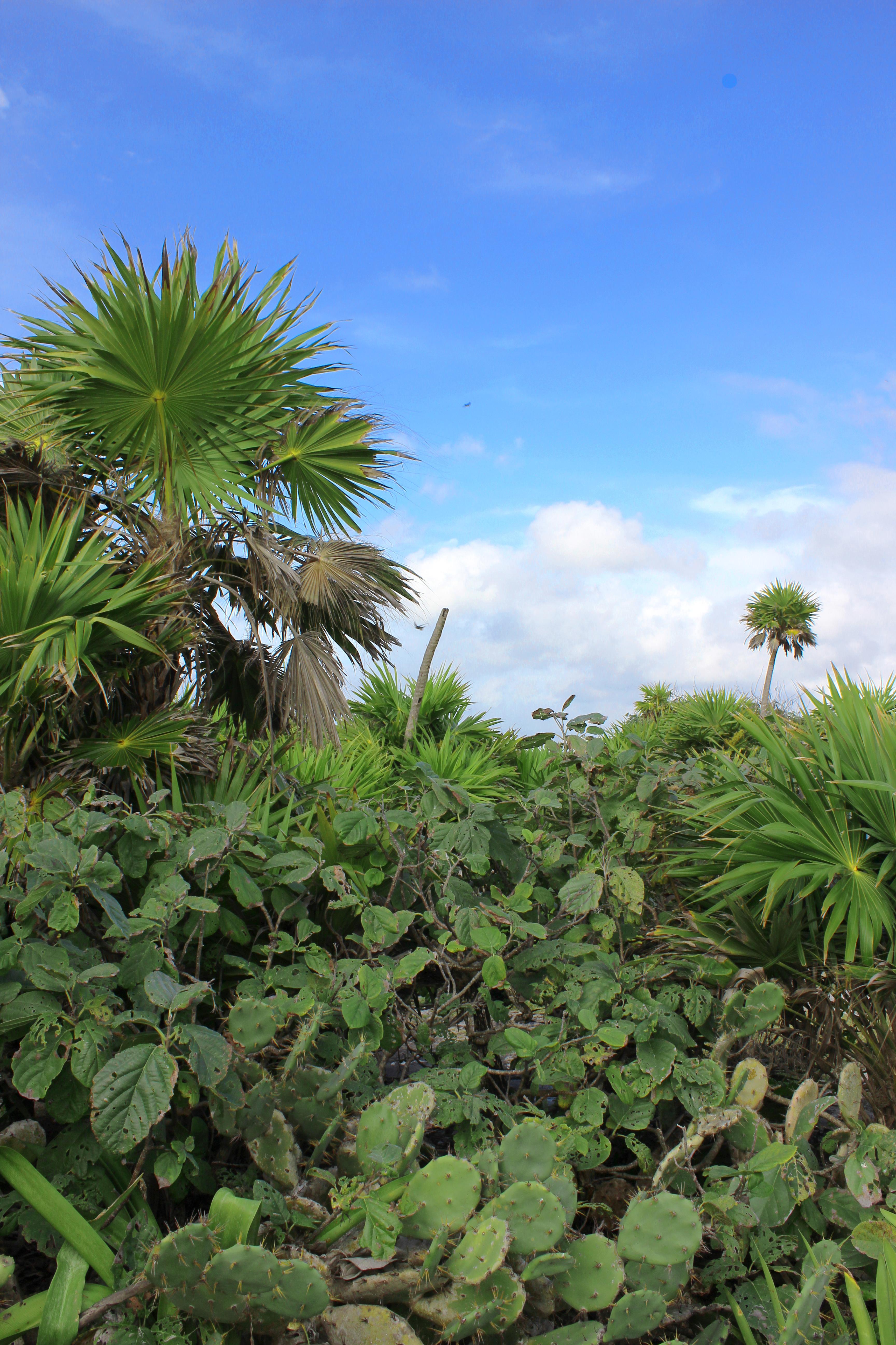 Tulum Cacti