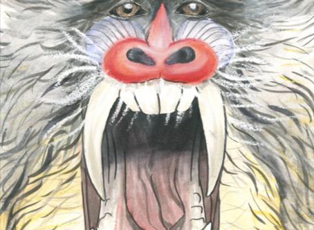 Student art: Mandrillus sphinx!