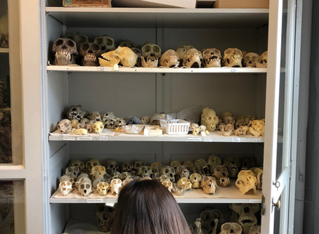 Sketching Skulls Gallery
