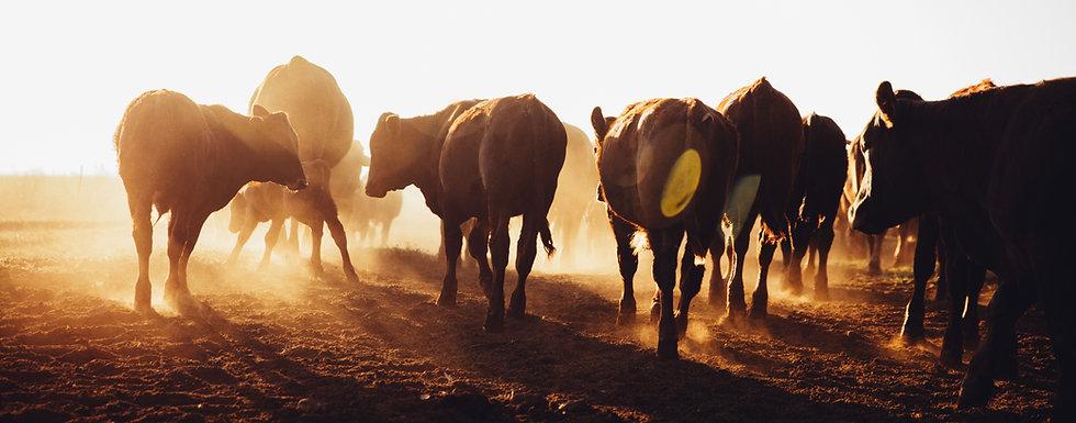 Beef_Landscape1.jpg