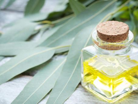 Infecção de garganta? O óleo de Eucalipto pode te auxiliar