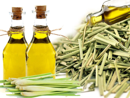 Óleo Essencial de Lemongrass conhecido também como capim-limão é muito utilizado para...
