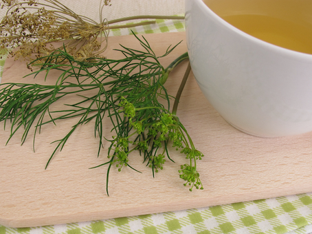 Chá de Endro: diversos atrativos em uma só planta e fonte de vitamina C, bom para época de pandemia