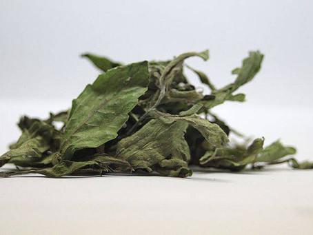 O chá de Stévia é normalmente usado como adoçante natural, tônico para o coração, obesidade.