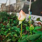blur background close flower.jpg